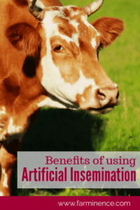 benefits of artificial insemination, benefits of artificial insemination in beef cattle, benefits of artificial insemination in dairy cattle, benefits of artificial insemination in sheep, benefits of artificial insemination in livestock, benefits of artificial insimeination in agricultuture, artificial insemination benefits, artificial insemination benefits beef cattle, artificial insemination benefits bovine