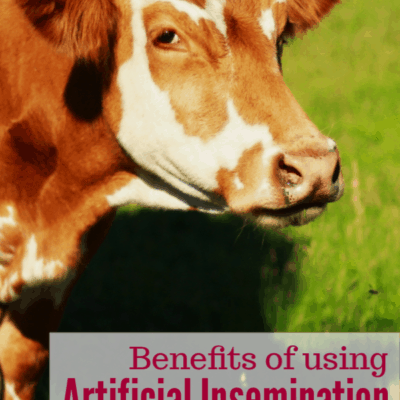 Benefits of Artificial Insemination