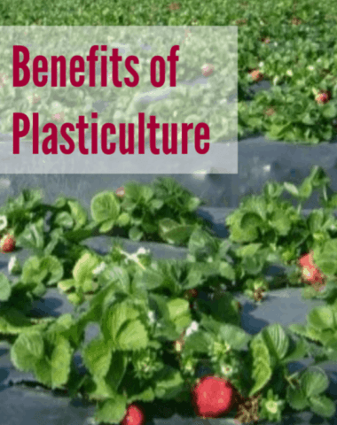 plasticulture, plasticulture strawberries, plasticulture farming, plasticulture in agriculture, plasticulture production, small scale plasticulture, what is plasticulture, what is plasticulture farming, what is a plasticulture system, benefits of plasticulture, plasticulture vegetable production, plasticulture tomatoes, how does plasticulture work