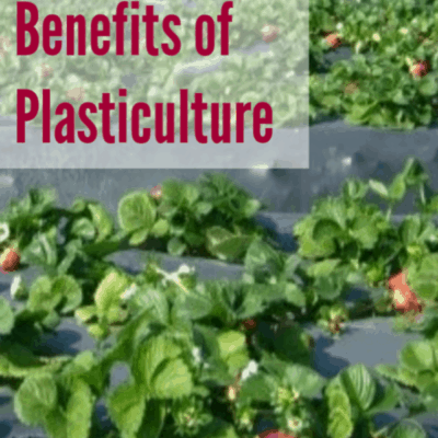 Improving Your Garden With Plasticulture