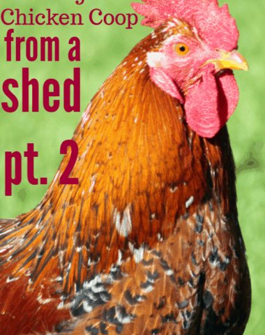 chicken coop from shed, building chicken coop from shed, chicken coop from garden shed, chicken coop ideas, chicken coop diy