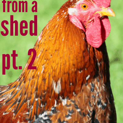 Building A Chicken Coop From Shed- Part II