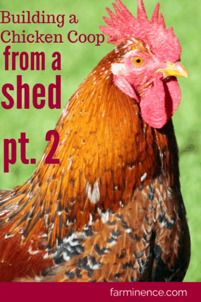 chicken coop from shed, building chicken coop from shed, chicken coop from garden shed, chicken coop ideas, chicken coop diy