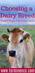 choosing a dairy breed