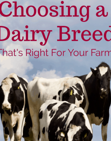 choosing a dairy breed, dairy cows, dairy cattle, dairy cow breeds, breeds of dairy cows, breeds of dairy cattle, dairy cattle breeds, best breed of dairy cow, best breed for dairy farming, choosing a breed of dairy cattle, types of dairy cows, types of dairy cattle, breeds of milk cows, breeds of milk cattle, breeds of milk producing cows, different breeds of milk cows, best breeds of milk cows