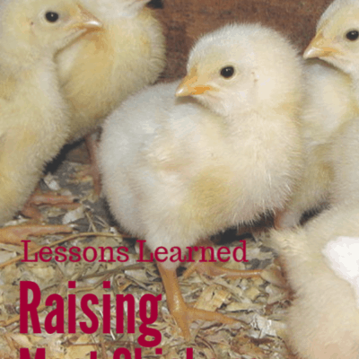 What I Learned Raising Meat Chickens