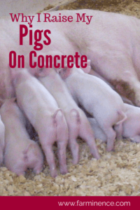 raising pigs, raising pigs for meat, raising pigs as pets, raising pigs for beginners, raising pigs pens, pig pen ideas, pigs on concrete, pigs on pasture