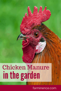 recycle chicken manure, chicken manure compost, chicken manure for garden, chicken manure fertilizer, chicken manure, chicken manure uses, using chicken poop as fertilizer, using chicken poop in the garden, using chicken manure in the garden, using chicken manure, using chicken manure in garden, chicken litter