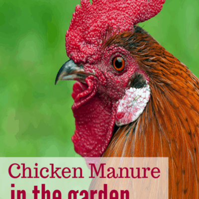 How I Recycle Chicken Manure