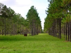 silvopasture design, silvopasture horses, silvopasture, pasture with trees, creating pasture