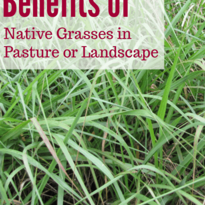 Benefits of Native Grasses on Your Farm