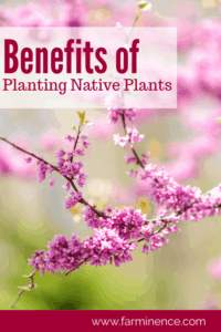 benefits of native plants, planting natives, planting native plants, landscaping ideas, landscaping natural, landscaping native plants, adding native plants, using native plants in landscape