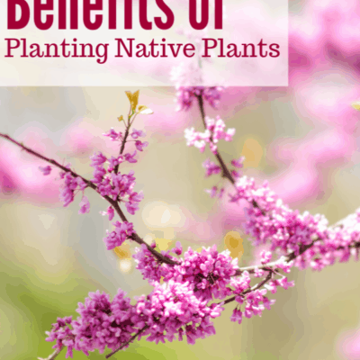Why You Need Native Plants on Your Farm