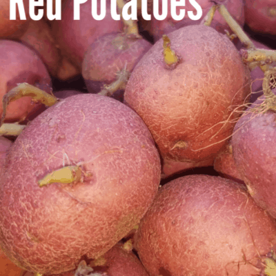 Our First Time Planting Red Potatoes