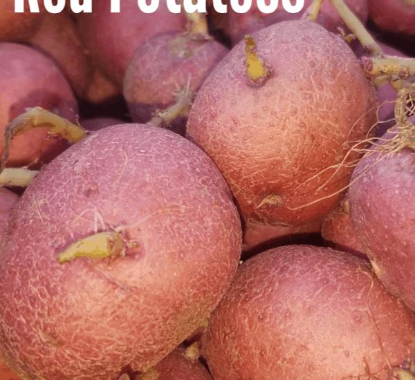 potato garden, potato gardening, potato gardening ideas, growing potatoes, how to grow potatoes, planting potatoes, red potato garden, growing red potatoes