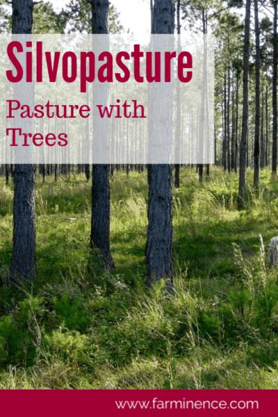 silvopasture design, silvopasture horses, silvopasture, pasture with trees, creating pasture