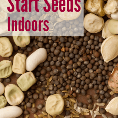 5 Benefits of Starting Seeds Indoors