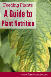 plant nutrition, plant nutrients, plant nutrient deficiency, plant nutrient deficiency leaves, feeding plants