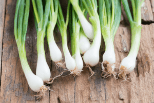 what to plant in fall garden, fall vegetable garden