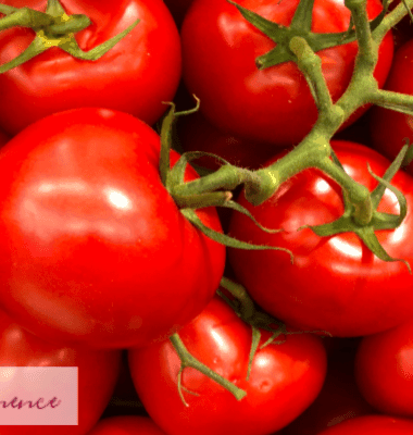 get rid extra tomatoes