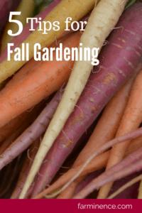 planting fall vegetables, fall garden, fall gardening, fall garden vegetables, fall garden planting, fall garden for beginners, fall garden tips