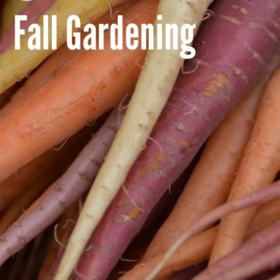 Planting Fall Vegetables