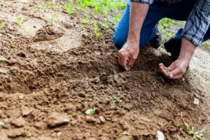 fall gardening preseeding