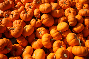 how to grow pumpkins for fall decor