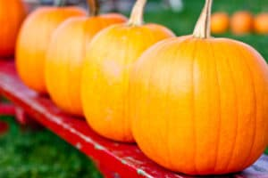 how to grow pumpkins