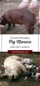 pig manure