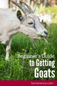 getting goats, goats, keeping goats