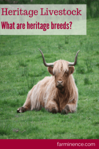 what are heritage turkeys, what are heritage breed chickens, what are heritage chickens, what are heritage breeds, what are heritage pigs, what are heritage breed birds, what are heritage breed meats, what is heritage breed pork, guide to heritage breeds, heritage livestock, heritage livestock breeds