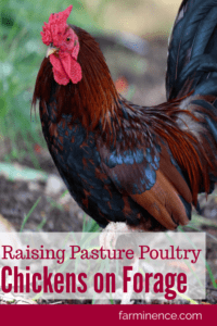 raising chickens on pasture
