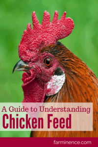 what to feed to chickens