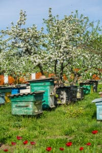 beneits of honey bees