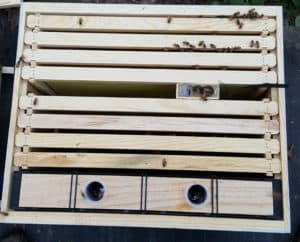 new honey bee hive, start honey bee hive