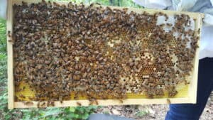 new honey bee hive
