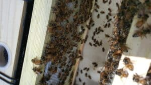 beehive inspection