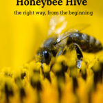 starting a new honey bee hive, setting up a new honey bee hive
