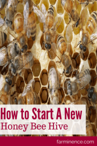 Starting new honey bee hive, start honey bee hive