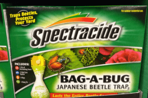 what to for japanese beetles, japanese beetle traps, get rid japanese beetles