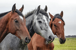 what is rain rot, rain rot in horses