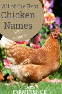 best chicken names