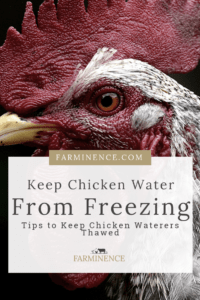 keep chicken water from freezing