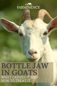 bottle jaw in goats, anemia in goats