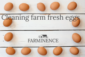 Cleaning and Storing Farm Fresh Eggs