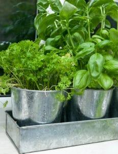 how to grow herbs indoors