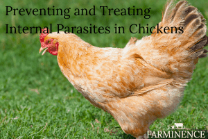 Internal Parasites in Chickens