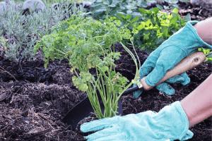 soil for planting herbs