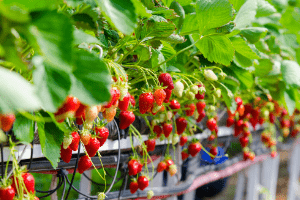 what is a hydroponics system